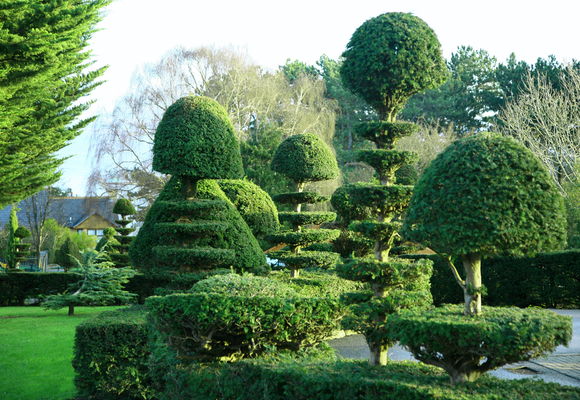 Topiary In Landscaping