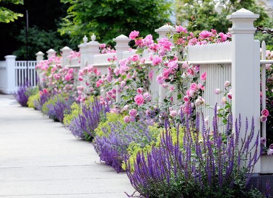 Landscape Borders Plants : Edging and border plants in landscaping